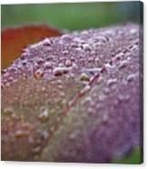 Rain Falls Lightly Canvas Print