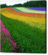 The Rainbow Of Flower At Hokkaido Canvas Print