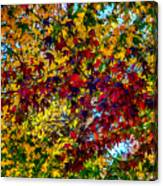 The Rainbow Tree Canvas Print