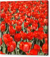 The Red Brigade Canvas Print