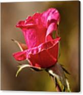 The Red Bud Canvas Print