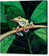 The Red Eyed Tree Frog Canvas Print