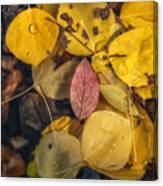 The Red Leaf Canvas Print