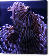 The Red Lionfish Canvas Print
