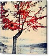 The Red Tree At Okanagan Lake Canvas Print