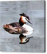 The Reflection Of A Grebe Canvas Print