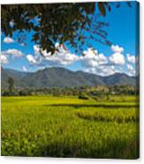 The Rice Fields Of Pai, Thailnad Canvas Print