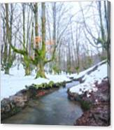 The River In The Otzarreta Forest With Snow Canvas Print