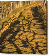 The Road To The Pasture Canvas Print