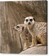 The Rock Of Meerkats Canvas Print