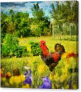 The Rooster's Garden Canvas Print