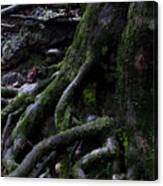 The Root Canvas Print