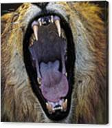 The Royal Yawn Canvas Print