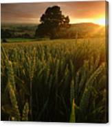 The Rural Sunset Canvas Print