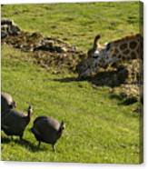 the Safari park Canvas Print