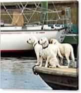 The Sailing Club Canvas Print