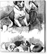 The Saint Bernard Club Dog Show Canvas Print