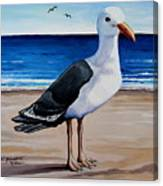 The Sea Gull Canvas Print