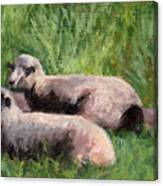 The Sheep Are Resting Canvas Print
