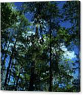 The Skyline Of Susan Creek Indian Mounds Canvas Print