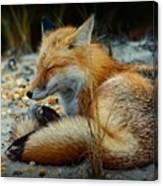 The Sleepy Fox Canvas Print