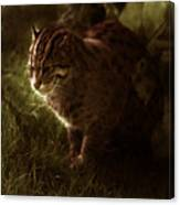 The Sleepy Wild Cat Canvas Print