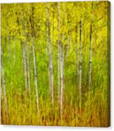 The Small Forest Canvas Print