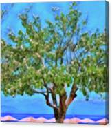 The Smiling Tree Of Benitses Canvas Print