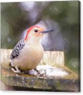 The Smiling Woodpecker  Canvas Print