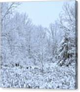 The Snow Falls To The Trees Canvas Print