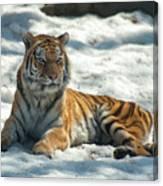 The Snowy Lion Canvas Print