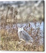 The Snowy Owl Canvas Print