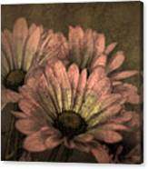 The Soft Glow Of Spring Canvas Print