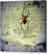 The Spider Waits Canvas Print