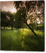 The Spring Orchard Canvas Print