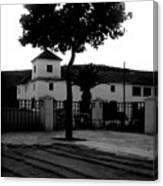 The Square Tree Canvas Print