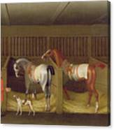 The Stables And Two Famous Running Horses Belonging To His Grace - The Duke Of Bolton Canvas Print