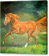 The Stallion-horse Art Painting  Canvas Print