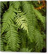The Standout Fern Canvas Print