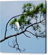 The Stoic Egret - Debbie May Canvas Print
