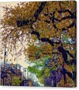 The Street Trees Canvas Print