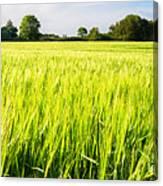 The Summer Crop Canvas Print
