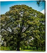 The Summer Tree Canvas Print