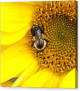 The Sun And The Bee Canvas Print