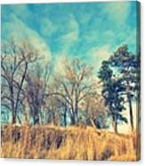 The Sunday Trees Canvas Print