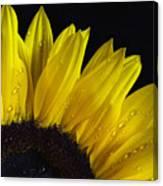 Sunflowers Canvas Print