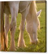 The Sunlight Caught In The Horse Tail Canvas Print