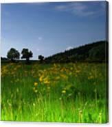 The Sunny Meadow Canvas Print