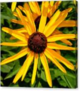 The Sunny Side Of Life Canvas Print