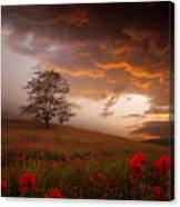 The Sunset Of The Poppies Canvas Print